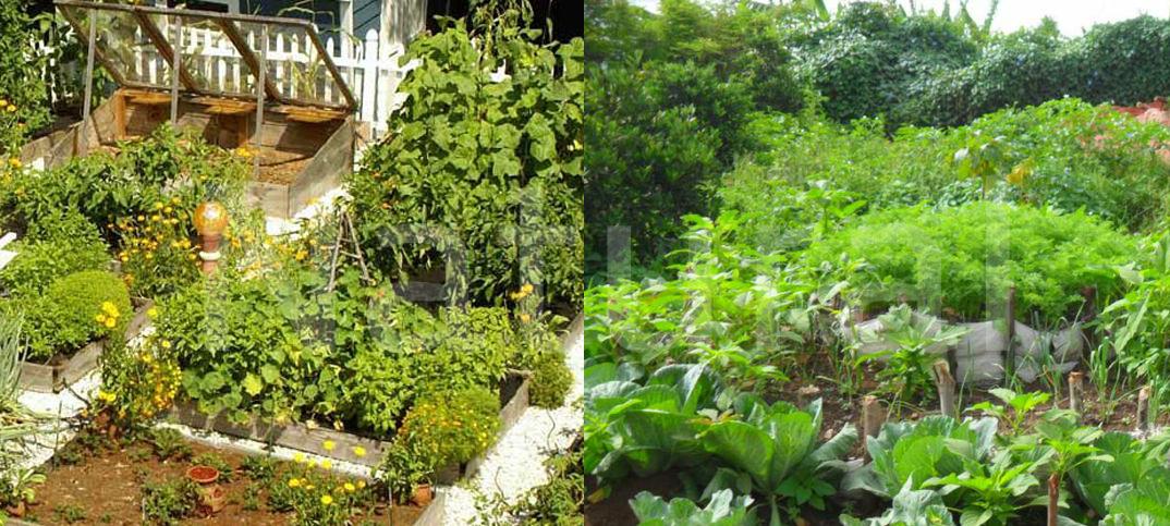 Doscientos dieciseis trucos y consejos de jardinería - Revista Natural