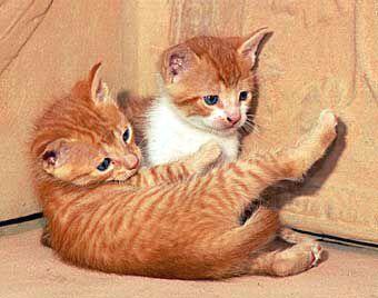 gatos290304